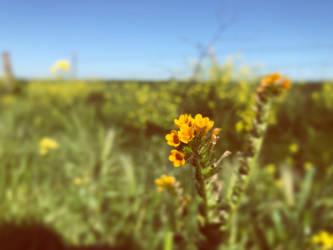 Country Wild flowers by macij209