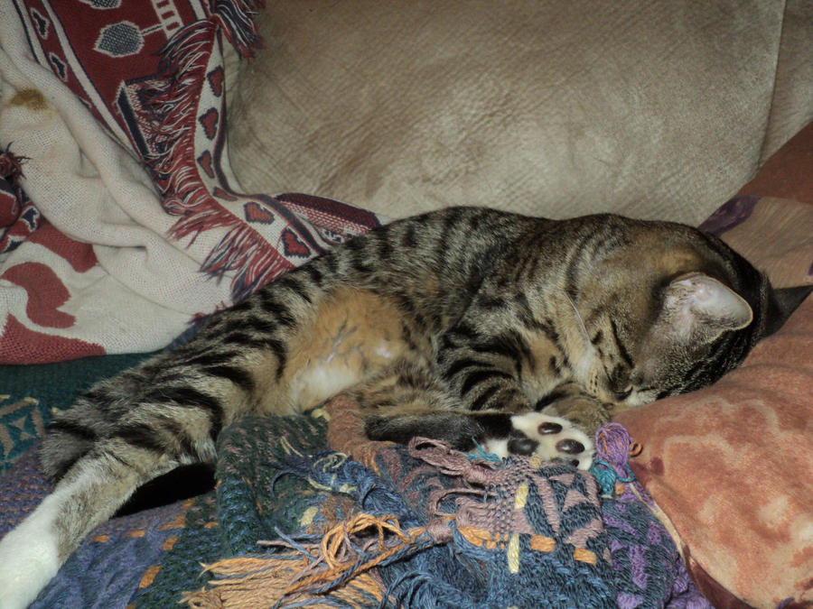 Sleepy cat is sleepy. by Absolute-Sero