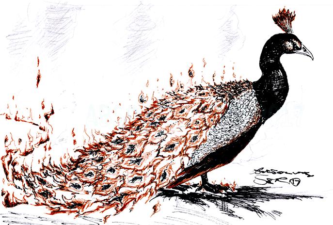 Phoenix of FIRE by Absolute-Sero