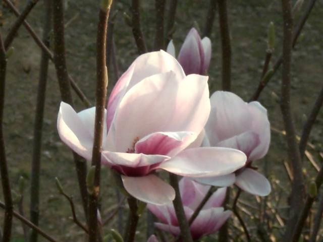 Flowers 7 by Hevonie