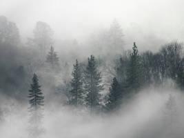 Misty mournings by FrozenStardust