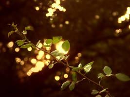 Lights from the sky by FrozenStardust