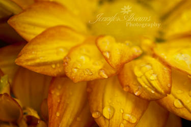 flowers and water drops by abramsje