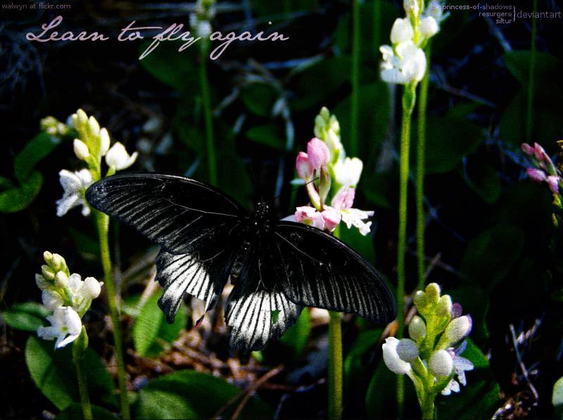Broken Wings by Siltur
