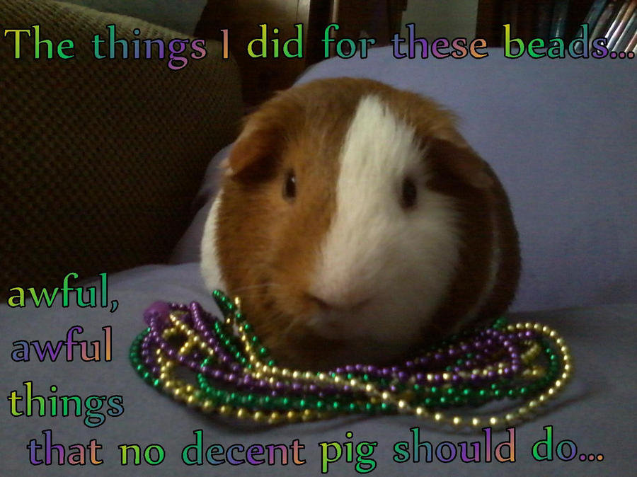Image result for mardi gras the day after