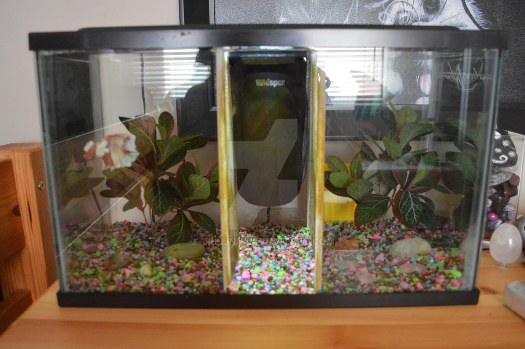 My updated five gallon by looloolemon