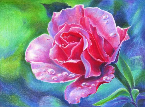 Rose by Haalu