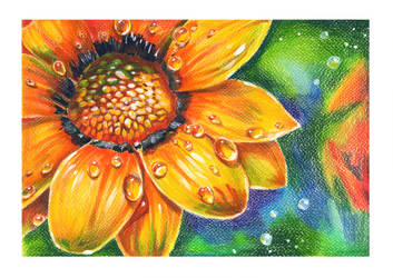 orange flower by Shnekokot