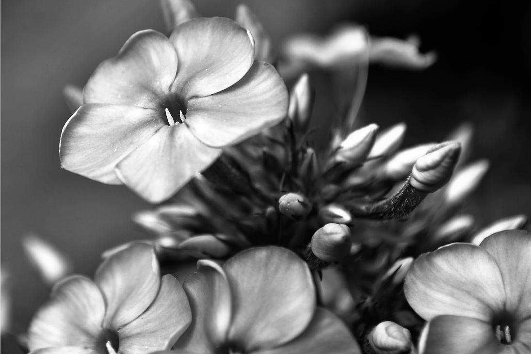 Black and White Flowers by wmartin1963