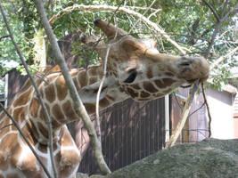 Giraffe by vampireFreak1015