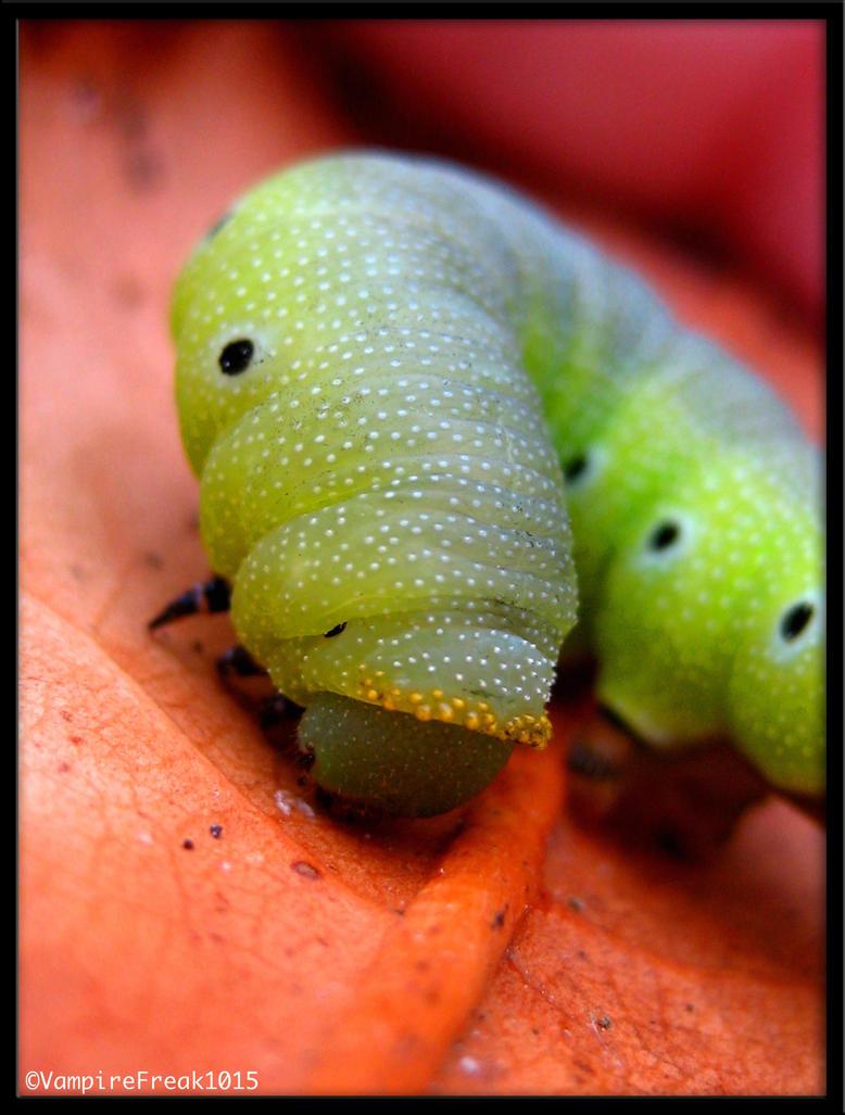 The Caterpillar II by vampireFreak1015