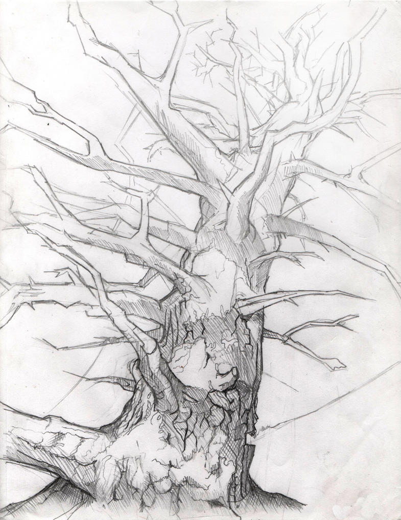 Tree without leaves by etvoluptas on DeviantArt