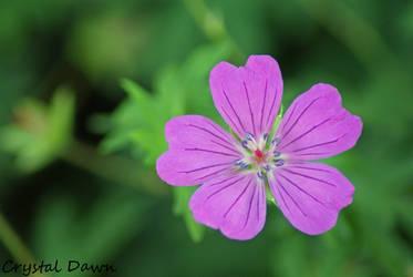 Purple Flower 1 by poetcrystaldawn