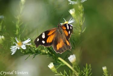 Butterfly Dreams 2