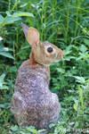 Bunny Rabbit by poetcrystaldawn
