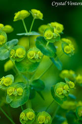 Alluring Green