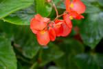 flowers (TAS)