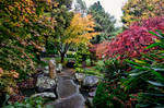 Autumn Tree Colour - Japanese Garden