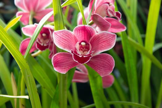 Spring Flower (TAS)