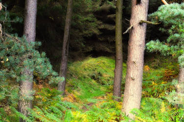 Glenveagh Forest 7389