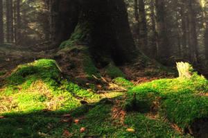 Glenveagh Forest 7527 by MajkaHarolds
