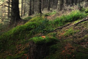 Glenveagh Forest 7402