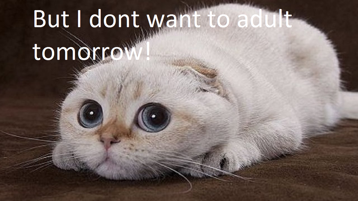 Adulting cat meme by MoonlightsFoxes
