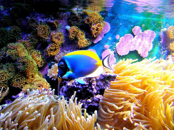 Underwater by xBatx815