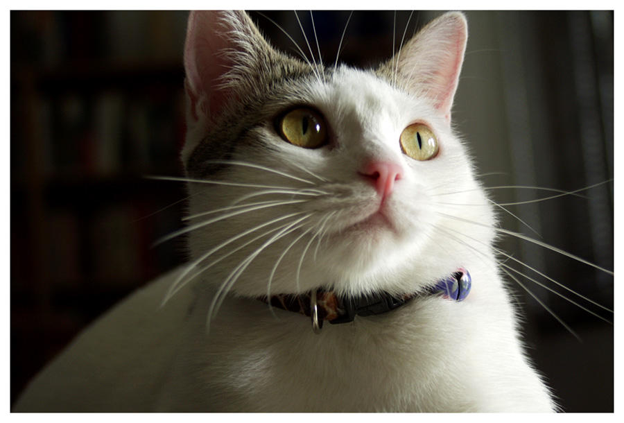 Portrait of a Kitty by ekster