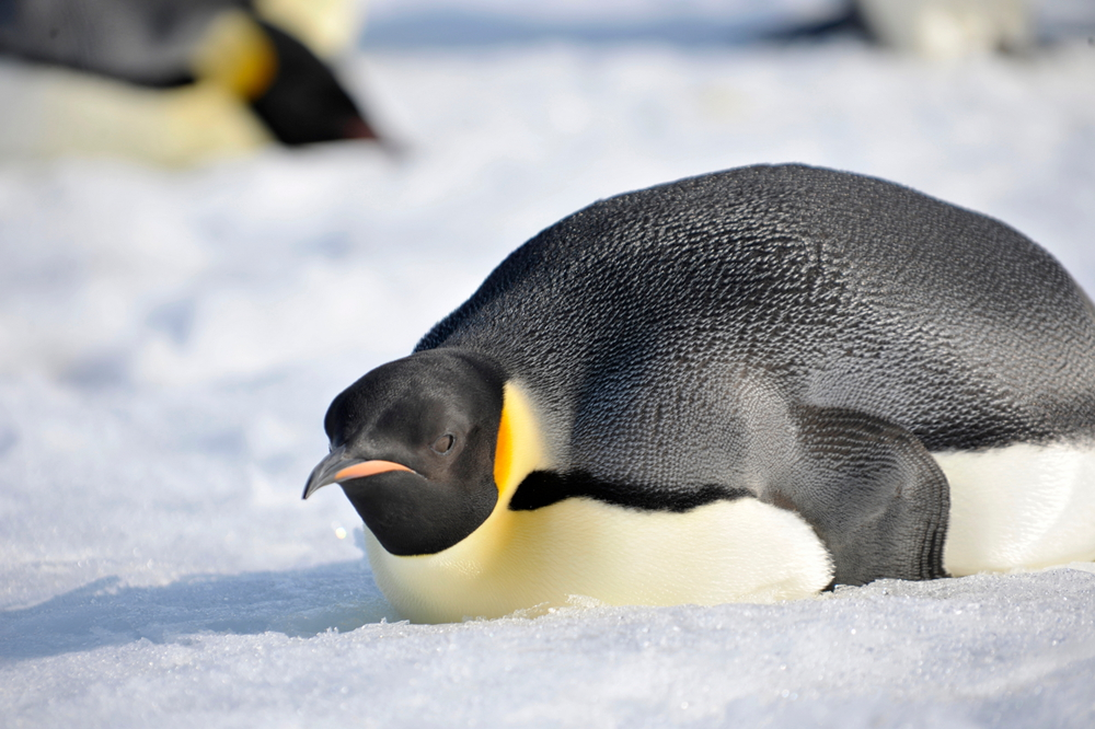 how to make a model of a penguin