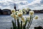 Bloomy Stockholm