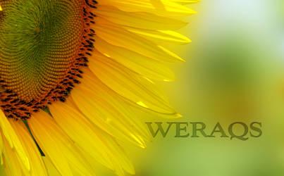 summer wallpaper by WERAQS