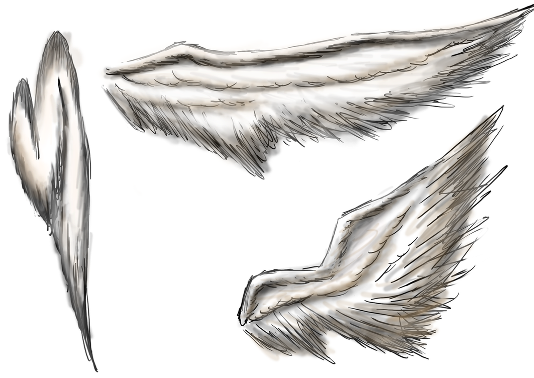 angel wings sketch by GumNutBunny on DeviantArt