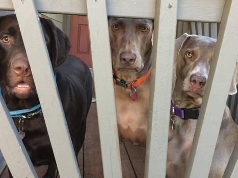 Doggy jail