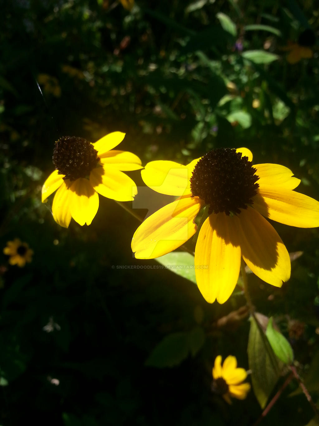 Yellow Coneflower By Snickerdoodles19 On Deviantart
