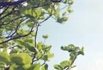 Leafy sky