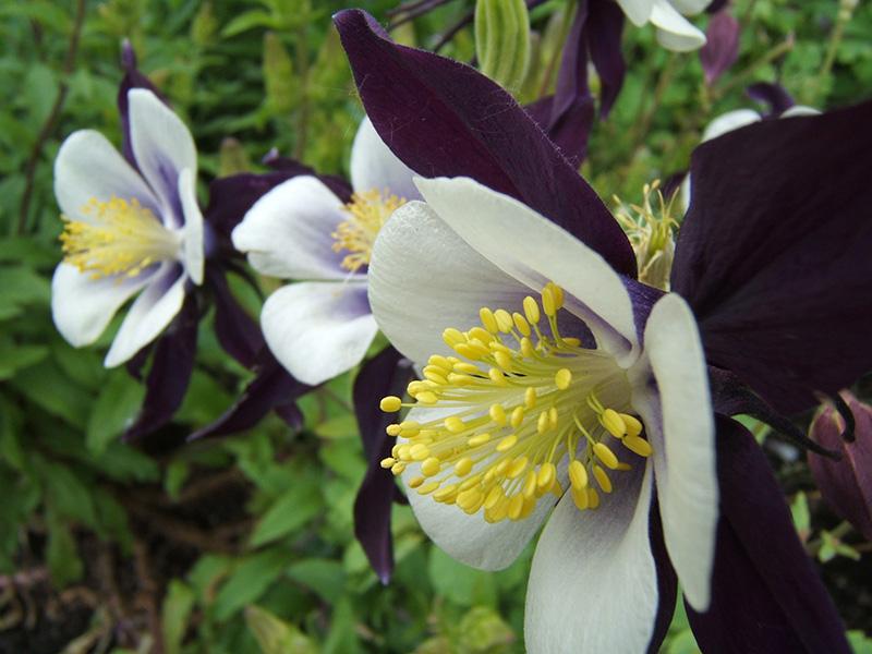 Oregon flowers by coffeedaze on deviantart for Oregon craft floral