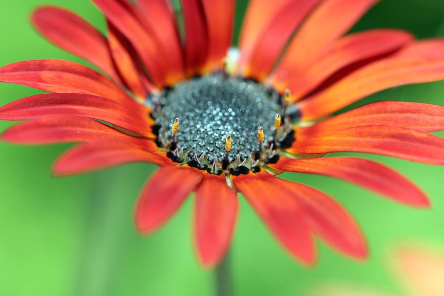 fleur by aldestmartin