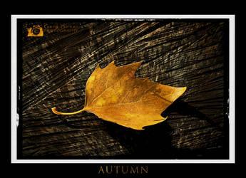 Autumn by AugustGaz