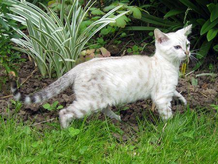 gt 600 Katten en Kittens te Koop of Gratis Afhalen