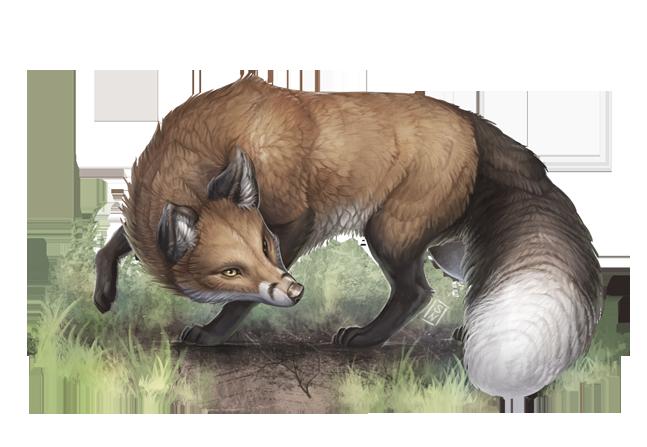 aventuria_bestiary___fox_by_gaiasangel-d