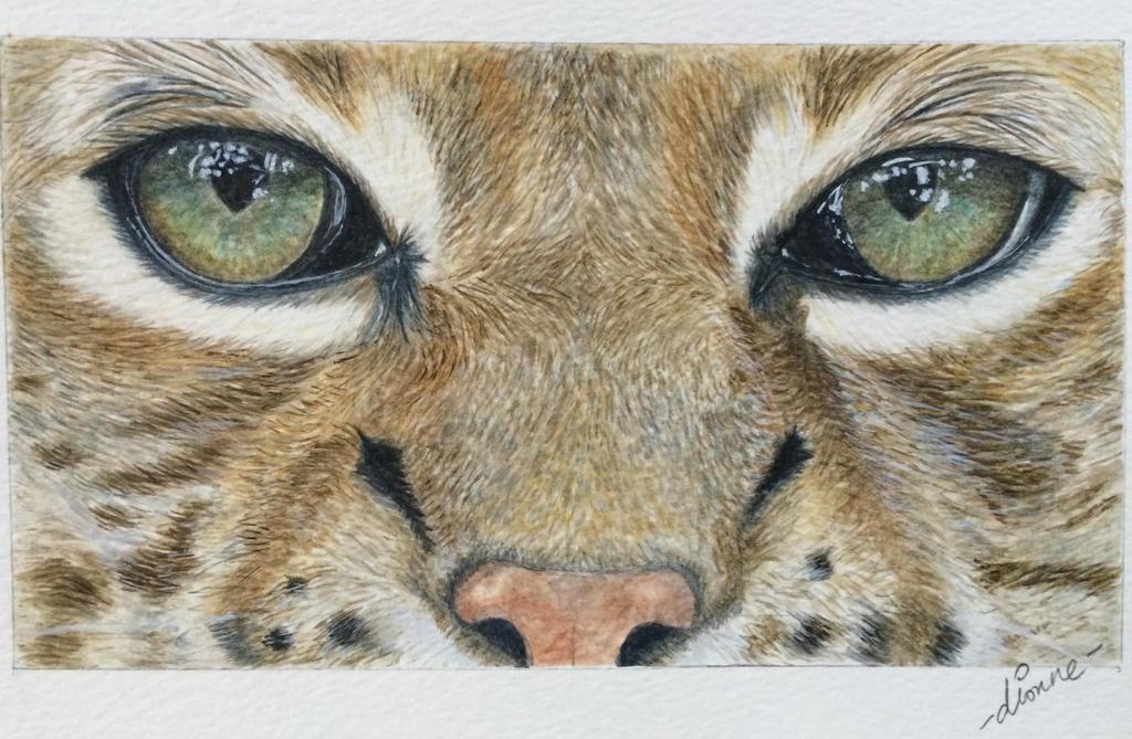 Bobcat Closeup  by Eileithya