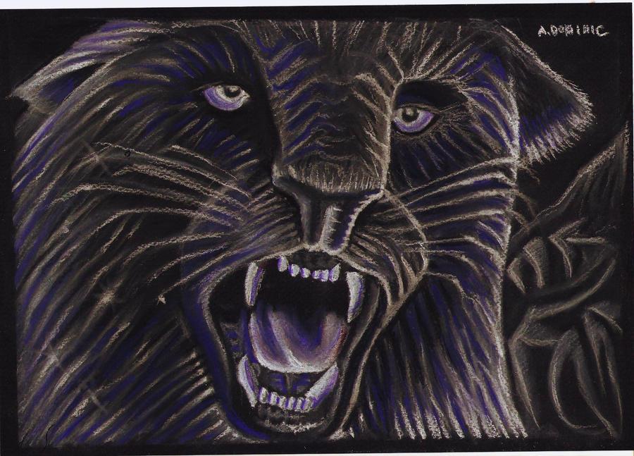 Wild tiger by Leptospyrra