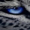 Blue Eyes by MrsSkinner