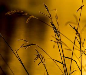 Grass clear by Bryarne