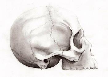 Skull by B-R-O