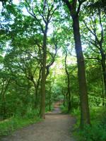 Woodland walk 9 by mirandaskye