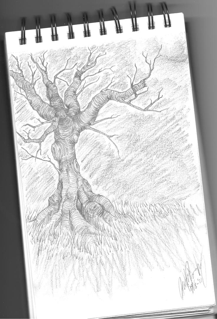 Old Tree by Yobi-chan