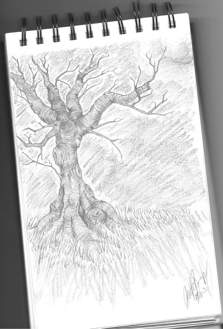 Old Tree by Yobi-chan