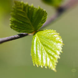 Spring ballad by teyasaveleva